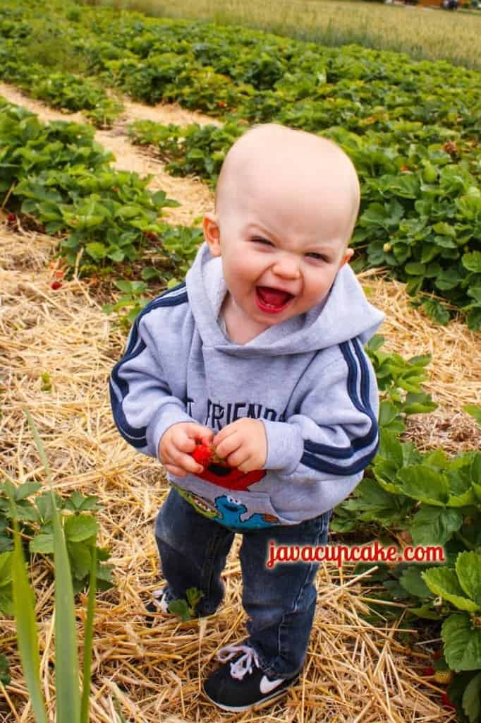 Baby JavaCupcake likes Strawberries