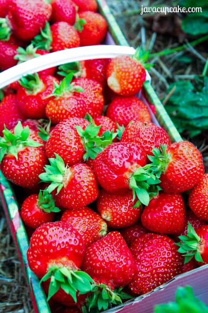 Fresh Picked Strawberries by JavaCupcake.com