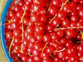 The History of Red Currants #RedCurrantWeek | JavaCupcake.com