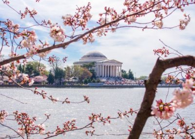Washington DC Cherry Blossoms | The JavaCupcake Blog http://javacupcake.com