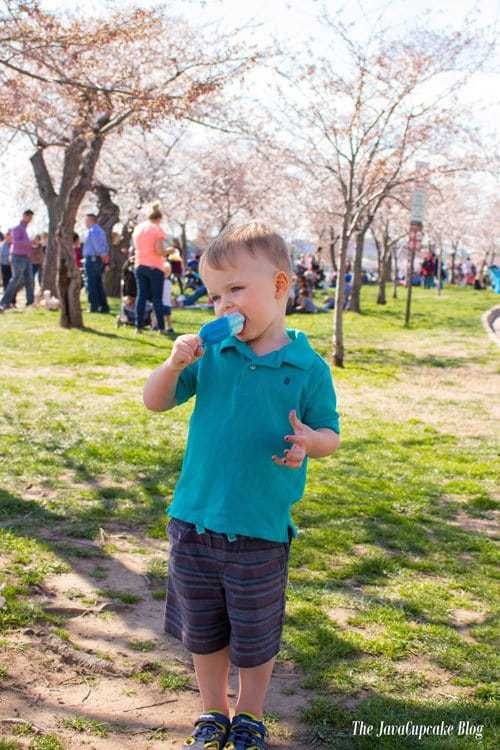 Washington DC Cherry Blossoms | The JavaCupcake Blog https://javacupcake.com
